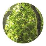 Tropische wildernisillustratie met geometrisch cijfer royalty-vrije stock foto's