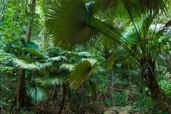 Tropische wildernissen royalty-vrije stock afbeeldingen