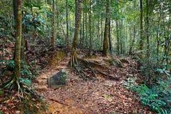 Tropische wildernissen royalty-vrije stock fotografie