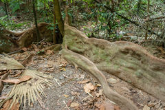 Tropische wildernissen royalty-vrije stock foto's