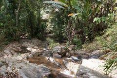 Tropische wildernissen stock fotografie