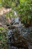 Tropische wildernissen stock foto's