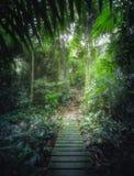 Tropische wildernissen met weg in Borneo, Azië stock foto's