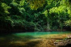 Tropische wildernissen van Thailand vroege ochtend bij zonsopgang royalty-vrije stock foto's