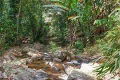Tropische wildernissen van Zuid-Azige royalty-vrije stock afbeelding