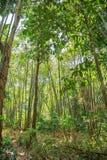 Tropische wildernissen van Zuidoost-Azië royalty-vrije stock afbeeldingen