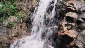 Tropische Wilderniswaterval stock videobeelden