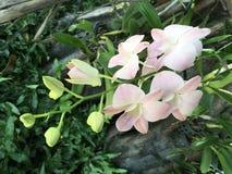 Tropische zacht, licht, pastelkleur roze orchidee royalty-vrije stock afbeelding