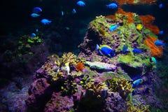 Tropische zeebedding Stock Foto