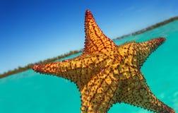 Tropische zeester in blauw water met lichte bezinning Royalty-vrije Stock Fotografie