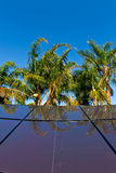 Tropische zonnepanelen Royalty-vrije Stock Fotografie