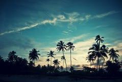 Tropische zonsondergang stock fotografie