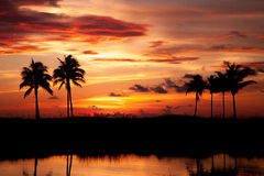 Tropische Zonsondergang Royalty-vrije Stock Fotografie