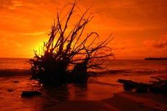 Tropische Zonsondergang Royalty-vrije Stock Foto's