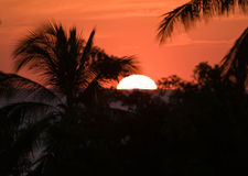 Tropische Zonsondergang in Costa Rica Royalty-vrije Stock Foto