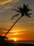 Tropische zonsondergang met palm. Stock Foto's