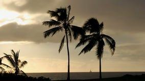 Tropische Zonsondergang met Palmen en Zeilboot stock footage