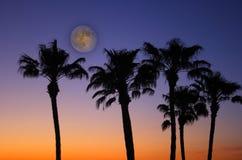 Tropische Zonsondergang met volle maan stock fotografie