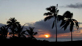 Tropische Zonsondergang over de Oceaan met Palmen stock footage