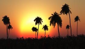 Tropische zonsondergang, palm in de zon stock foto's