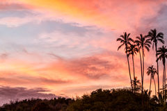 Tropische zonsondergangpalmen Stock Foto