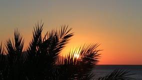 Tropische zonsopgang stock videobeelden