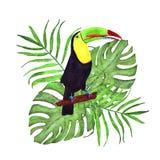 Tropische Zusammensetzung des Aquarells mit Palme und monstera Blätter und Tukan stock abbildung