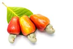 Tropischer Acajoubaum trägt Früchte (Anacardium occidenta) Lizenzfreie Stockfotografie