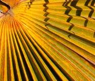 Tropischer Auszug Lizenzfreies Stockfoto