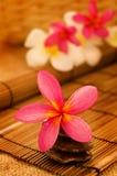 Tropischer Badekurort mit Frangipaniblumen. lizenzfreie stockbilder