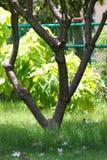 Tropischer Baum stockfotografie
