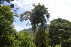 Tropischer Baum Lizenzfreies Stockbild