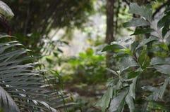 Tropischer Baum Stockbild