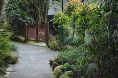 Tropischer Baum Stockfotos