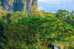 Tropischer Baum in den Hochländern in den Strahlen Stockfotografie