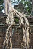 Tropischer Baum, der über Steinen wächst Stockbild