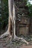 Tropischer Baum, der über Steinen wächst Stockbilder