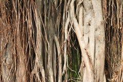 Tropischer Baum-Hintergrund Stockbild