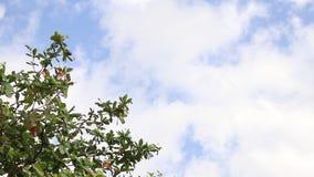 Tropischer Baum verlässt unter dem bly Himmel mit weißen Wolken auf einer exotischen Insel Bali, Indonesien Paradiesszene stock video