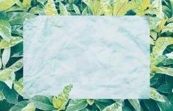 Tropischer Blattrahmen der Draufsicht mit Textbereich-Kopienraum auf weißem Hintergrund lizenzfreie stockfotografie