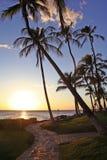 Tropischer blauer Himmel mit Palmen Lizenzfreies Stockfoto