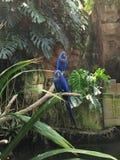 Tropischer blauer Vogel Stockbilder
