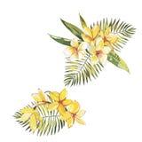 Tropischer Blumen Plumeria lokalisiert auf weißem Hintergrund ENV 10 Stockbilder