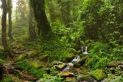 Tropischer Dschungel Lizenzfreies Stockbild