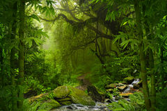 Tropischer Dschungel Lizenzfreie Stockbilder