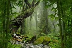 Tropischer Dschungel Stockbild
