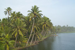 Tropischer Dschungel auf Wasser Stockfoto