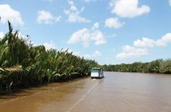 Tropischer Dschungel Borneos, Indonesien Stockbild