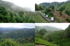 Tropischer Dschungel mit Bergen und Teeplantagen lizenzfreie stockfotografie