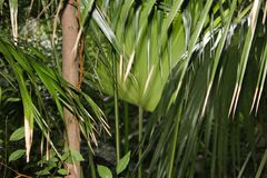 Tropischer Dschungel in Oahu lizenzfreie stockbilder